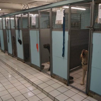 Gårsdal Katte- og Hundepension