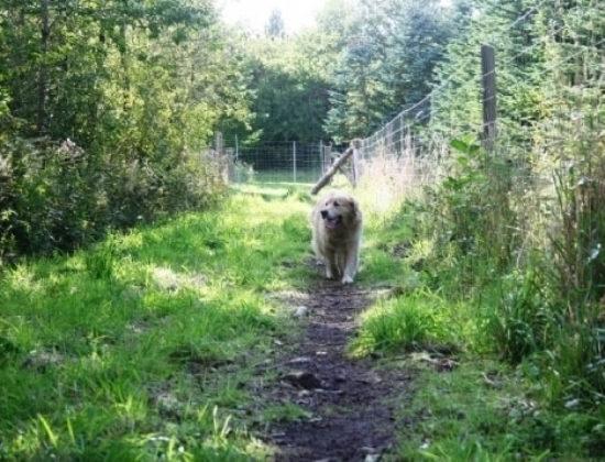Holstebro Hundepension