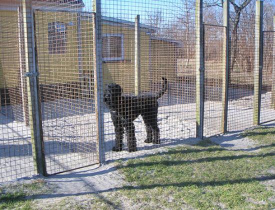 Hundepension Lillebo