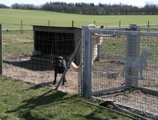 Vallumsøens Hundepension