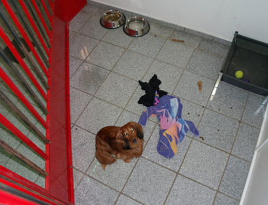 Alletidershunde.dk
