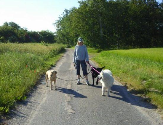Egeby Hundepension