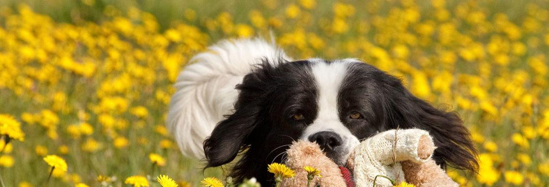 Borgmosegaard Hundecenter