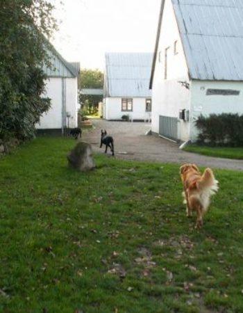 Terslev hunde og kattepension