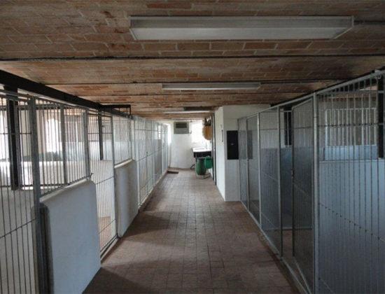 Hedens Hundehotel