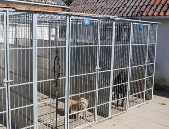 Langesø Hundepension