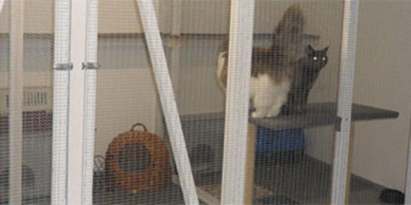Fredholmgård hunde- og kattepension