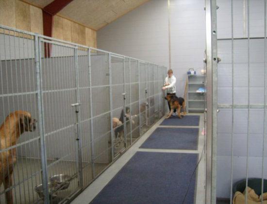 Lyne Hundepension