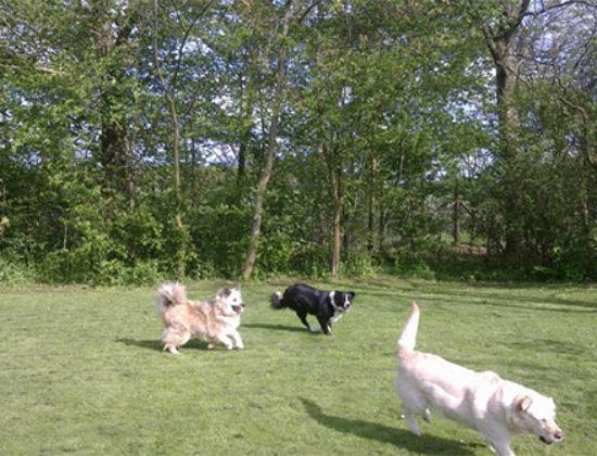 Søndergård Hunde og Kattepension