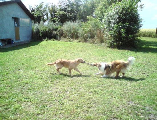 Syddjurs Hundepension