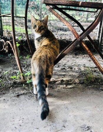 Højvang Kattepension