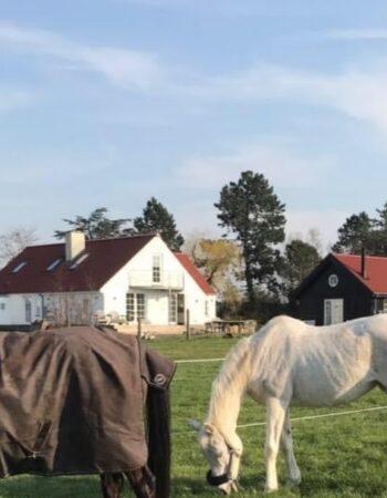 Hvidesten Hestepension