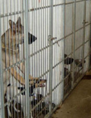Hirtshals hunde- og kattepension